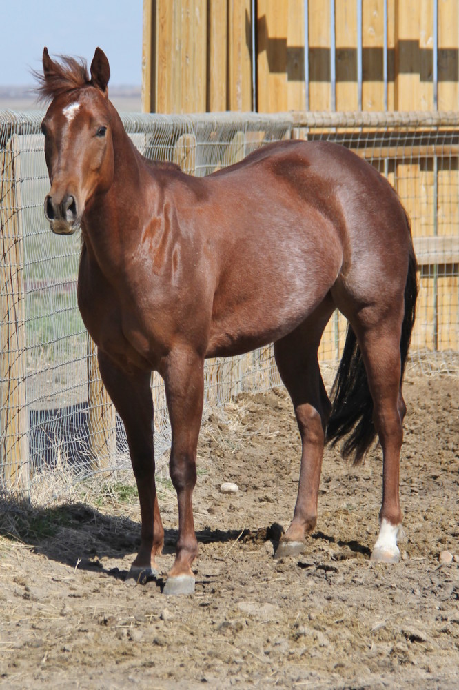Mare by Go On With Out It - Cutting Horse Stallion