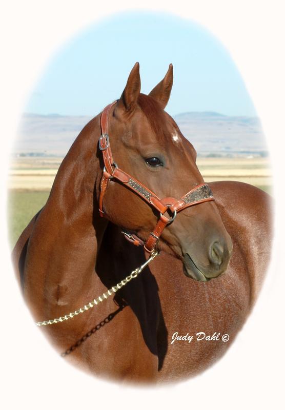 Pistelero Peggy Cutting Horse Brood Mare