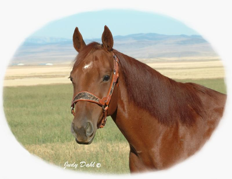 Pistelero Peggy Cutting Horse Brood Mare